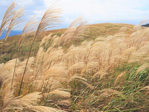 黄金色の草原と農家のジェラート